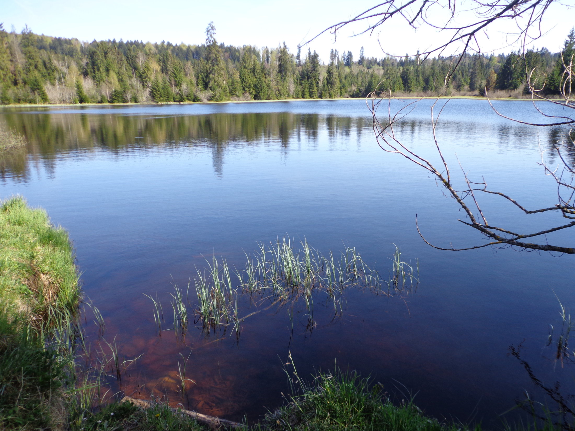 L'étang des Royes