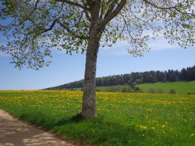La Bosse au printemps