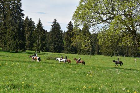 Cavaliers dans les pâturages